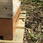 Bienen vor dem Einflugloch