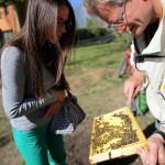 Jeannette Frank betrachtet ein Wabenrähmchen mit ansitzenden Bienen