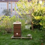 Bienenpatenvolk von Ruth Vollmar