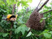 Maskottchen SaBiene verfolgt interessiert das Geschehen rund um den Bienenschwarm