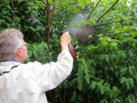 Reinhold besprüht die Bienen mit Wasser, damit sie nicht auffliegen