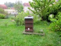 2300-Bienenschwarm-trotz-genuegend-Platz