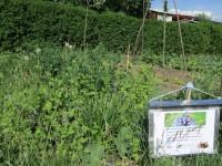 2425-IKu-Bienenweideparzelle