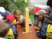 Schulkinder betrachten ein Bienenschaufenster