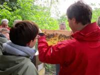 VHS-Kursteilnehmende betrachten eine Bienenwabe