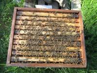 Eine von diesen Bienen zeichnet für den Stich verantwortlich!