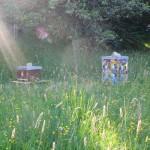 Strahlender Bienenstandort