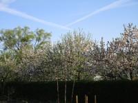 Obstbäume auf der ERBA-Insel