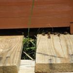 Bienen unter einer Beute in den Buger Wiesen