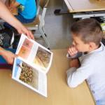 Schulbiene zeigt Unterschied Biene und Wespe