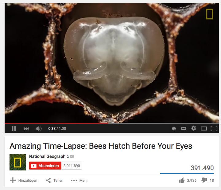 National Geographic Bienenentwicklung