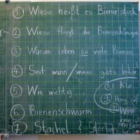 3910-Bienenfragen-Lichteneicheschule-1c