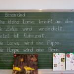 """Tafeltext """"Bienenkind"""" von Jutta Wittko, 1b Lichteneicheschule Memmelsdorf"""