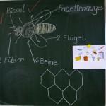 Tafelzeichnung zu Biene und Waben von Jutta Wittko, 1b Lichteneicheschule Memmelsdorf