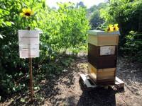 Lehrbienenstand ERBA-Park