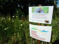 Bienen-Blühweide, Parzelle im Interkulturellen Garten Bamberg