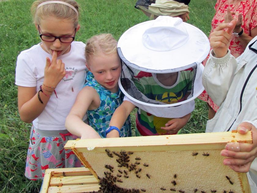 Naschen aus der frischen Honigwabe