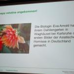 Folie Asiatische Hornisse, vespa velutina nigrathorax (Dr. Stefan Berg, Fachzentrum Bienen, LGW Veitschöchheim)