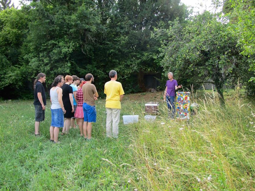 Studentengruppe erhalten Unterricht im Honigernten