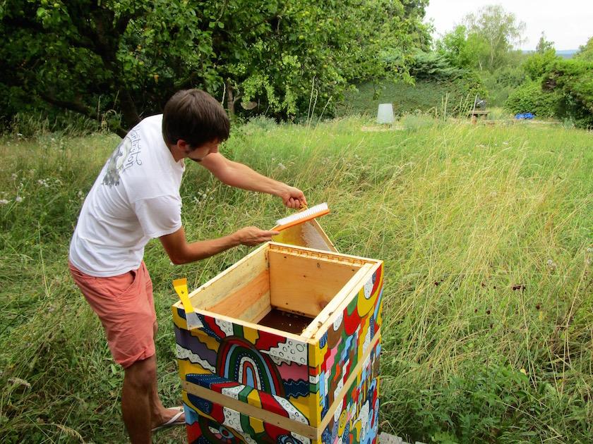 Student beim Honigernten