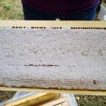 Gefüllte Honigwabe