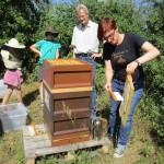 Bienenpatin Christina Michel kehrt Bienen ab