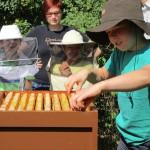 Wenzel zieht eine Honigwabe