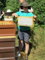 Wenzel zeigt eine Honigwabe
