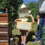 Tonia zeigt eine Honigwabe