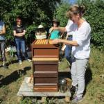 Sabine beim Honigernten