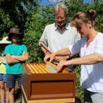 Sabine erntet eine Honigwabe