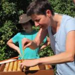 Bienenpatin Ina Kudlich lockert ein Rähmchen