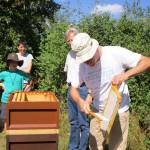 Felix kehrt die Bienen ab