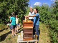 Heiko zieht eine Honigwabe