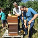 Heiko beim Abkehren der Bienen