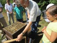 Imker Reinhold Burger an der offenen Bienenbeute