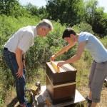 Bienenpatin Ina Kudlich zieht eine Honigwabe aus ihrem Patenvolk