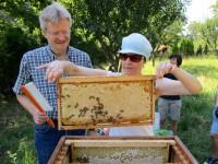 Marion erntet eine Honigwabe