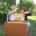 Stefanie erntet eine Honigwabe