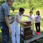 Marion kehrt Bienen ab