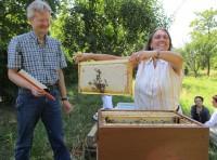 Jeannette erntet eine Honigwabe