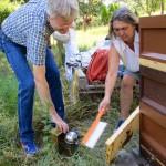Jeannette kehrt Bienen ab