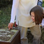 Jessica beobachtet, wie Bienen gestreichelt werden