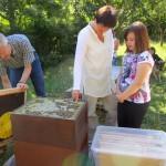 Ilona Munique zeigt Jessica das Bienenstreicheln