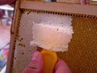 5208-entdeckeln-einer-Honigwabe-Nahaufnahme