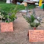 Sträuße an der Trachtpflanzenstation