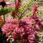 Biene im herbstlichen Flor