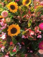 Blumenschmuck aus der Gärtnerei Böhmerwiese