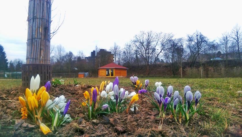 Bienen-InfoWabe (BIWa), Erba-Park Bamberg, vor Krokussen; Foto @ Christian Rindchen
