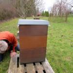 Totenfallkontrolle am Bienenvolk Wildensorg